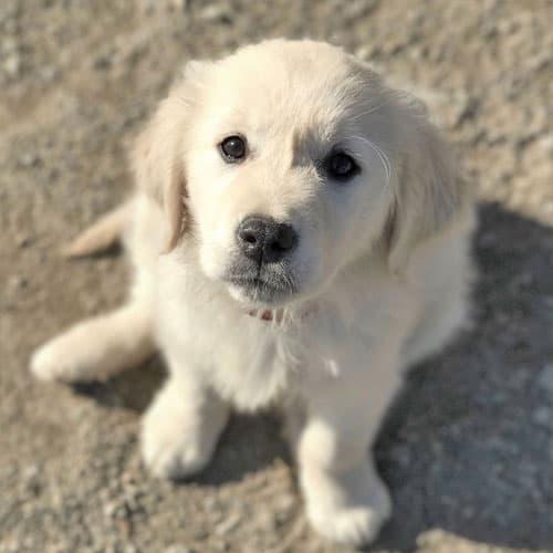 Accueillir un chien à la maison