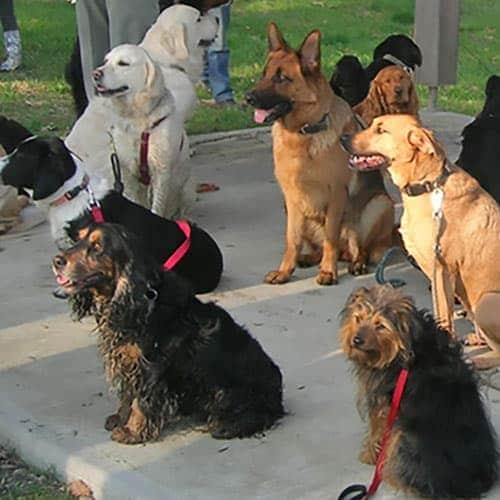 Cours d'éducation canine à Nantes