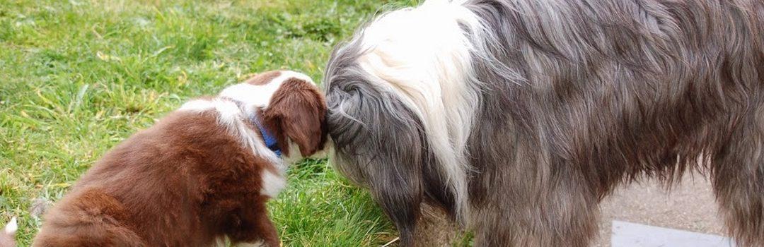 Conseils pour un chien propre