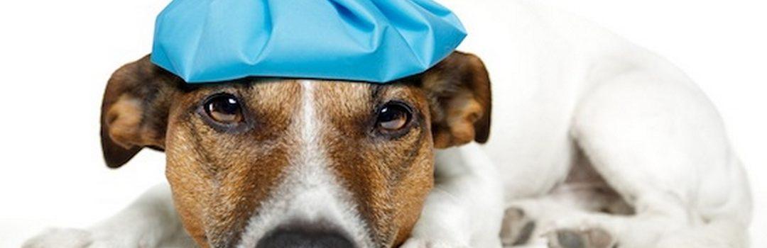 Produits toxiques pour chien