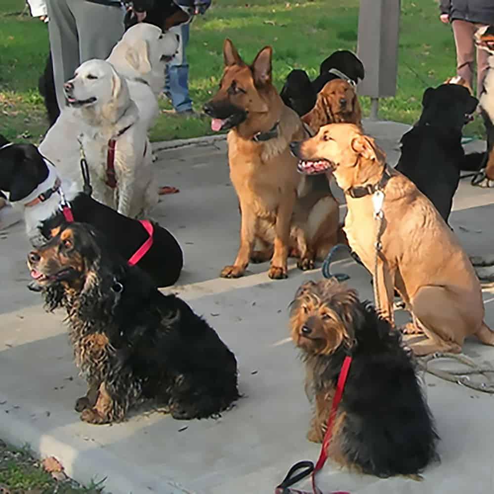 Cours canins à Saint-Herblain
