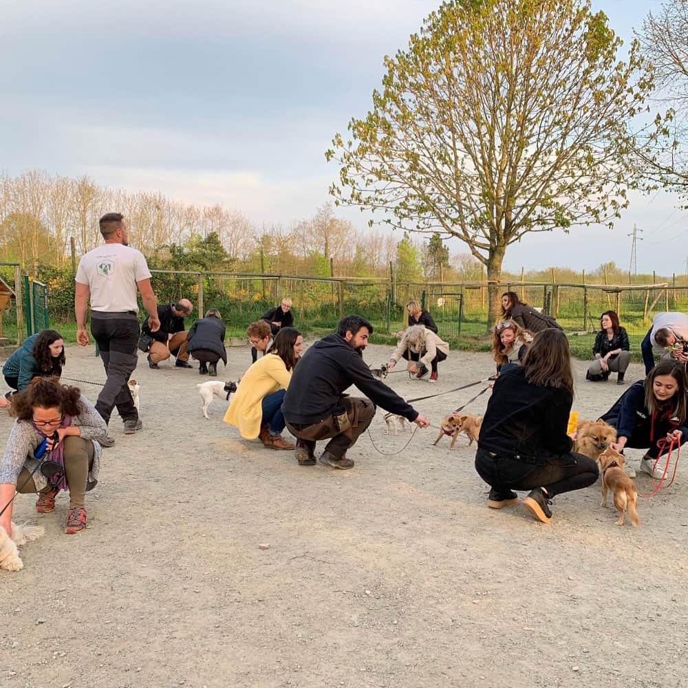 Récréation pour chien à Nantes