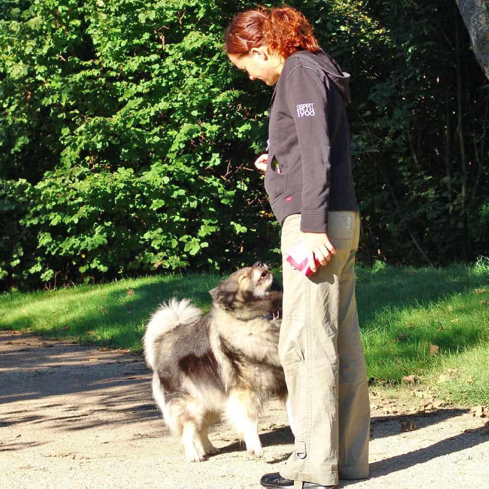 Éduquer son chien à Nantes