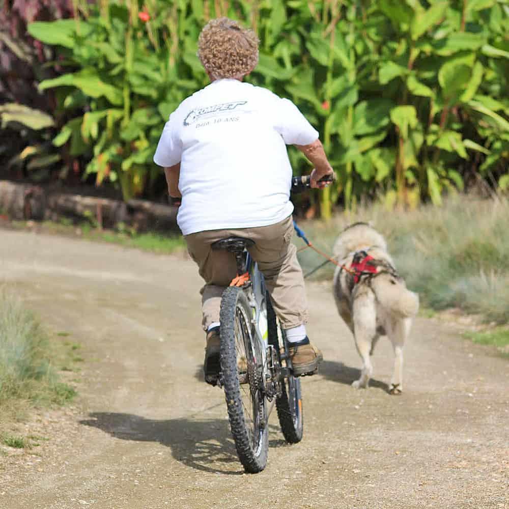 Faire du vélo avec son chien à Nantes
