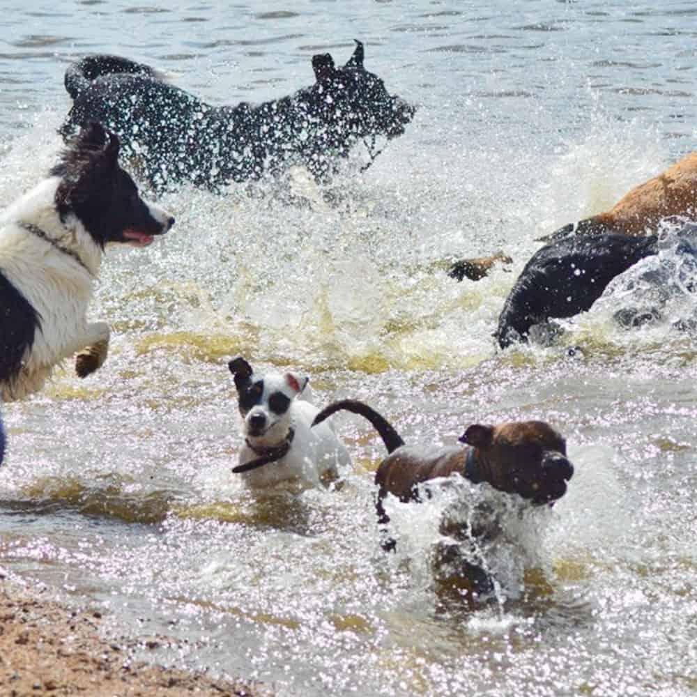 Promener son chien en bord de mer