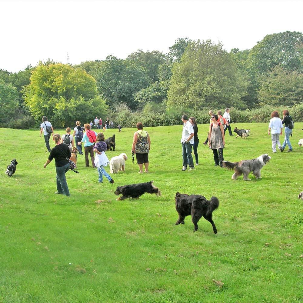 Promener son chien dans un parc