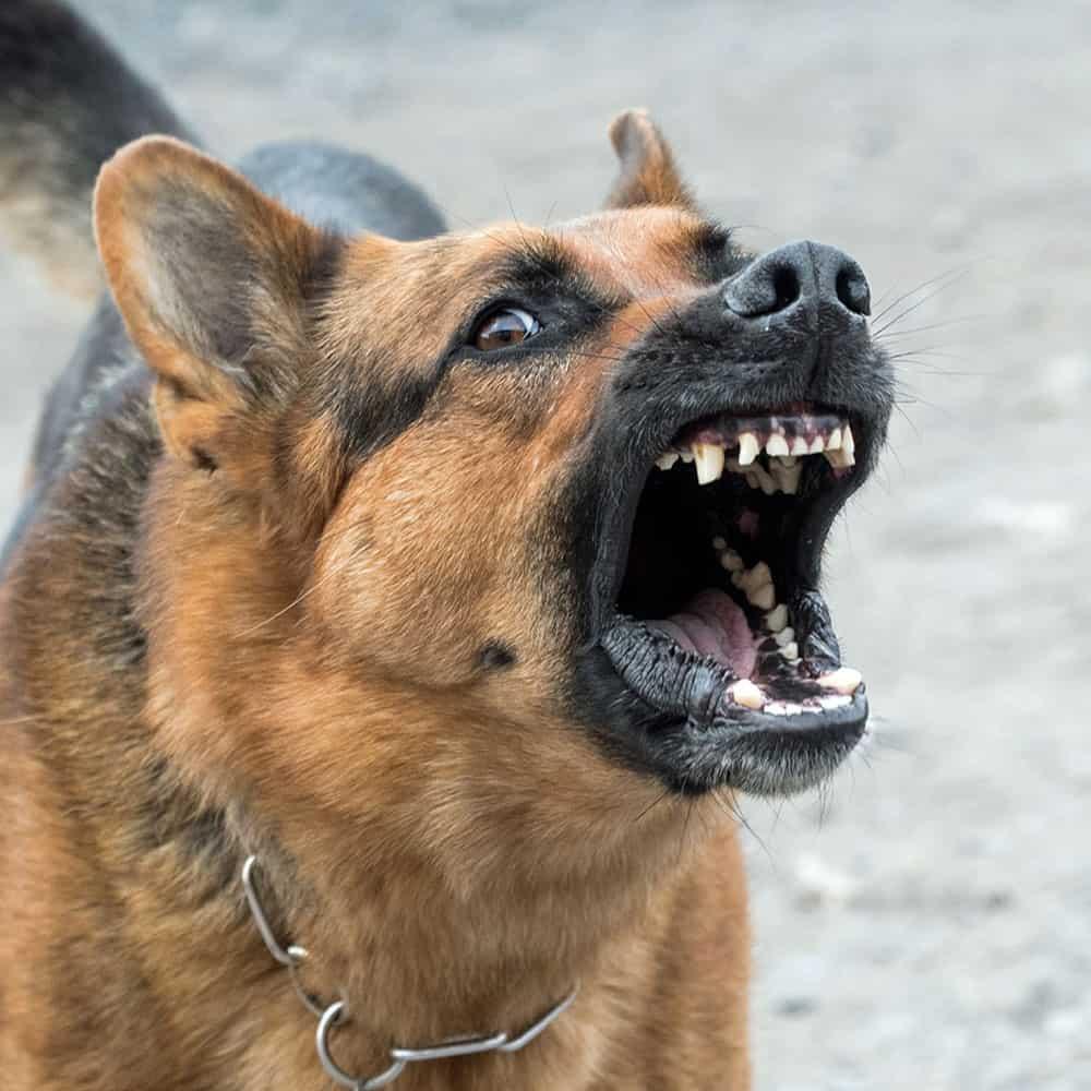 Formation prévention des risques canins à Nantes